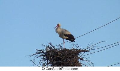 stork  clicks  beak