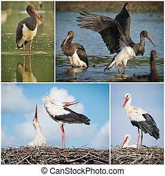 Stork collage