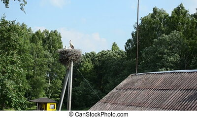 stork family bird nest
