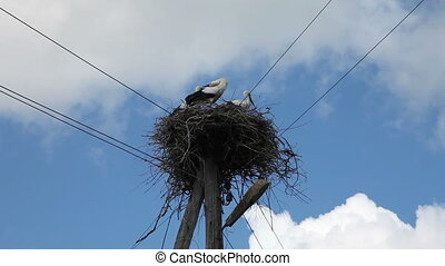 Stork family in a nest - Three storks in a nest