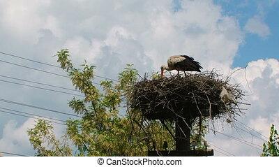 Stork feeds children in the nest - Stork feeds children in a...