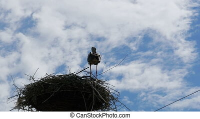 Stork in a Nest on a Pillar High Voltage Power Lines on Sky Background