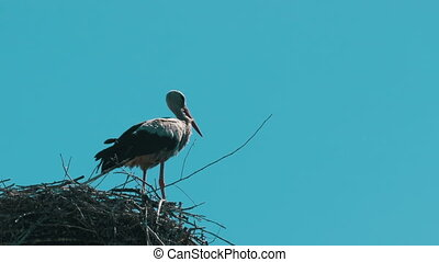 Stork in a Nest on a Pillar High Voltage Power Lines on Sky...