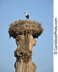 stork in a nest on an old tree