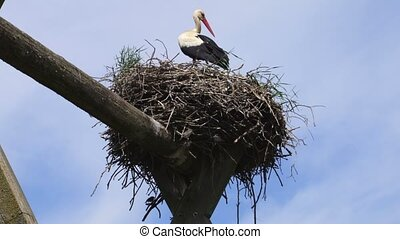 Stork in nest in summer