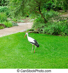 Stork in the city garden.