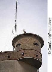 Stork in the city