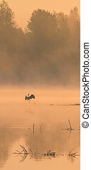 Stork in the water at sunset