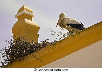 Stork in top of roof