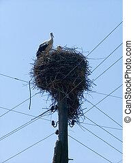 Stork nest 2