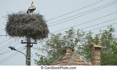 Stork Nest on Street Pillar - A stork nest on a stree pillar...
