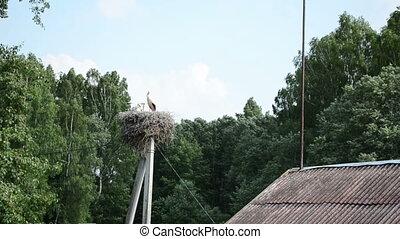 stork nest pole