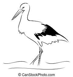 Stork on sketch - Isolated illustration of stork on sketch