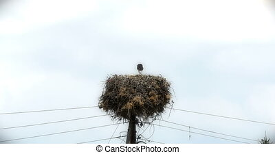stork on telephone pole 4k