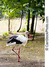 Stork on the wild park field.