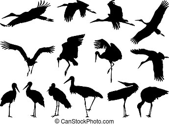 Stork silhouettes - vector - Collection of vector ...
