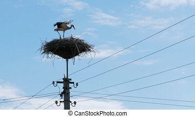 Stork Sitting in a Nest on a Pillar High Voltage Power Lines...