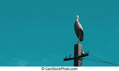 Stork Sitting on a Pillar High Voltage Power Lines on Blue...