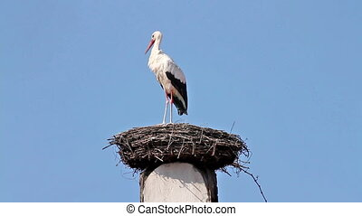 Stork makes clear in the nest