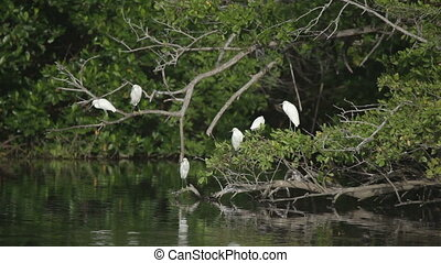 storks and other birdlife in a lagoon, oaxaca, mexico