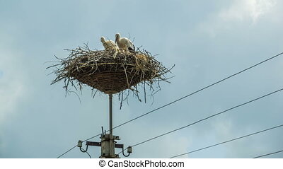 Storks are Sitting in a Nest on a Pillar. Time Lapse -...