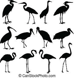 storks, cranes and flamingos silhouettes - vector