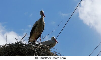 Storks Family in its Nest on a Pillar - Storks Family in its...