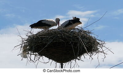 Storks Family in its Nest on a Pillar