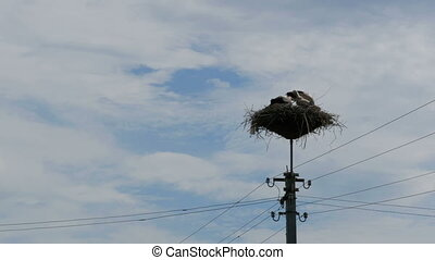 Storks Family in its Nest on a Pillar. Time Lapse