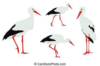 storks illustration