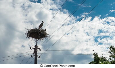 Storks in a Nest on a Pillar. Time Lapse - Storks Sitting in...