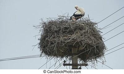 Storks in a Nest on Street - Storks nest on a street pillar.