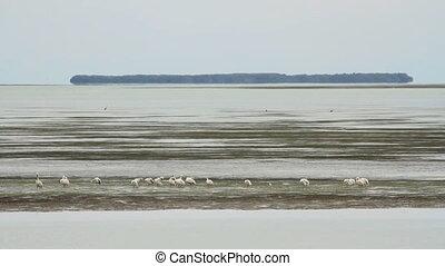 Storks in Bay - A flock of storks on a sandbar in the...