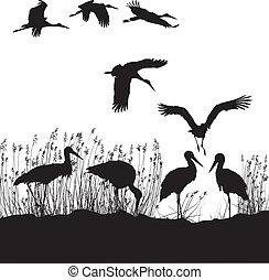 Storks in peat