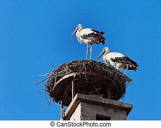 Storks in the nest in Rust, Austria
