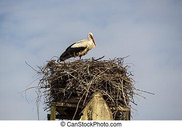 stork's, nest, deutschland, ruehstaedt