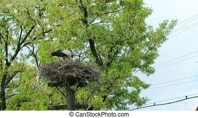 Stork's nest on an electric pole - A stork's nest on an...