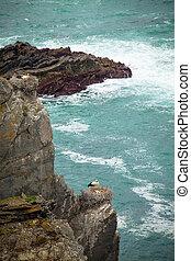 storks on cliff portugal - breeding storks on cliff coast ...