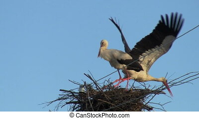 storks - stork flies from the nest, the other remains
