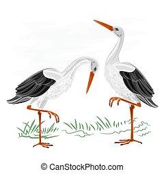Storks water bird vector