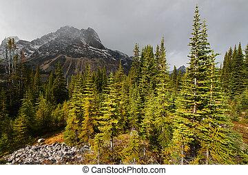 Storm Approaches Jasper National Park