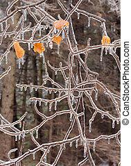 storm., après, branches, glace, couvert