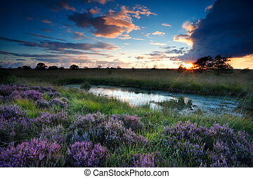 storm at sunset over swamp with flowering heather - storm at...