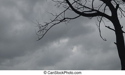 storm clouds and branches of tree