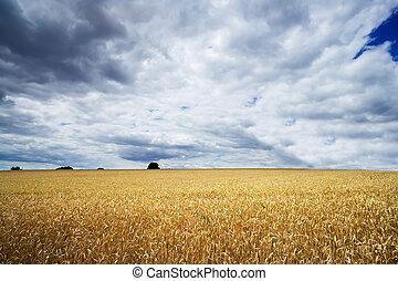 Storm clouds over a golden field.