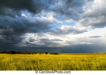 Storm clouds over a grassy savannah. The vast expanses of the Horn of Africa. The famous Masai Mara Reserve in Kenya. The concept of ecological, exotic, extreme and photo tourism