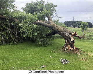Storm Damage Broken Ash Tree