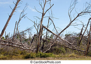 Storm Damage - Florida tree damage from hurricane winds