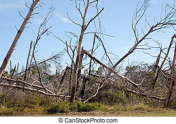 Storm Damage - Florida tree damage from hurricane winds