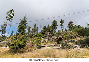 Storm damage in a forest